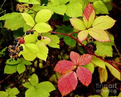 Photograph - Blackberry Bush by Craig Wood