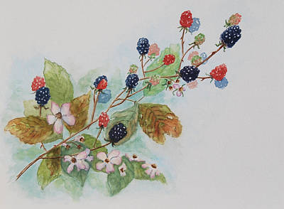 Blackberry Composition Art Print by Geraldine Leahy