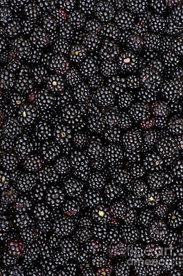 Rosaceae Photograph - Blackberry Harvest  by Tim Gainey