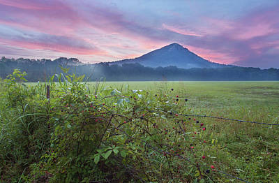 Photograph - Blackberry Sunrise by Eilish Palmer