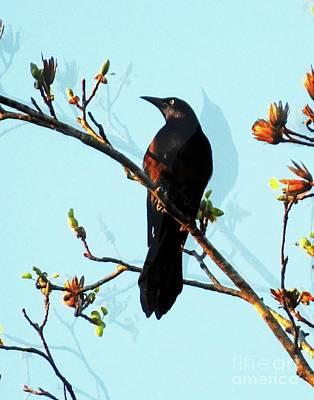 Photograph - Blackbird 5 by Lizi Beard-Ward