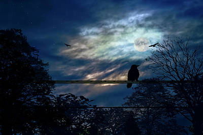 Photograph - Blackbird And Moonlight Serenade by Diane Schuster
