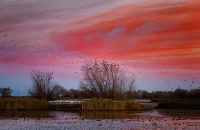 Photograph - Blackbird Dawn by Kathleen Bishop