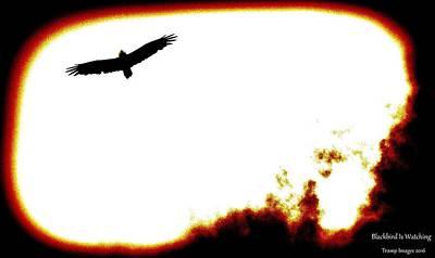Photograph - Blackbird Is Watching by Wesley Nesbitt