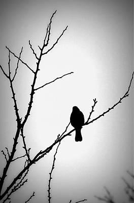 Photograph - Blackbird by Matt Keough