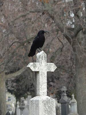 Blackbird On A Old White Cross Art Print by Gothicrow Images