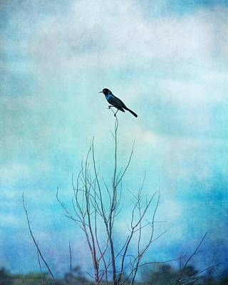 Photograph - Blackbird On Tree Branches, Blackbird Blue Sky by Melissa Bittinger