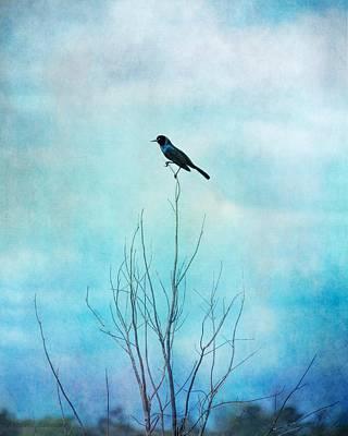 Photograph - Blackbird On Tree Branches, Blackbird Blue Sky by Melissa Bittinger