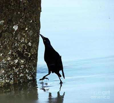 Photograph - Blackbird On Tybee Island by Leara Nicole Morris-Clark