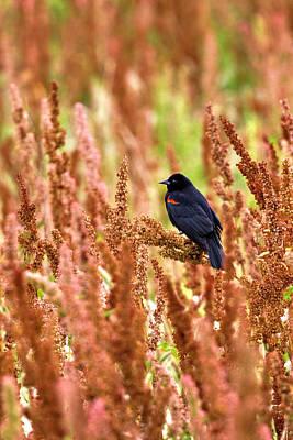 Photograph - Blackbird by Paul Riedinger