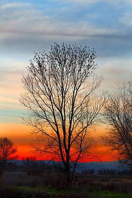 Photograph - Blackbird Silhouettes by Kathleen Bishop