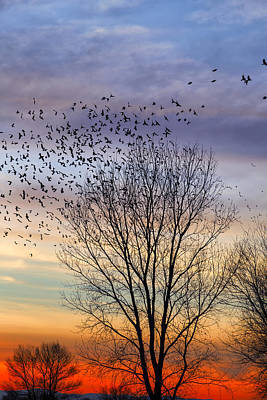 Photograph - Blackbird Sunset by Kathleen Bishop