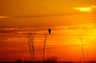 Photograph - Blackbird Sunset by Steve Stuller