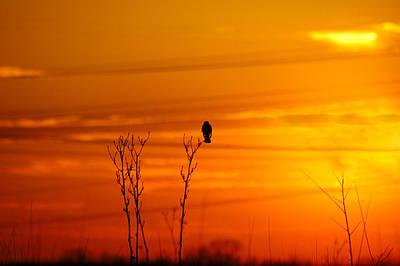 Animal Watercolors Juan Bosco - Blackbird Sunset by Steve Stuller