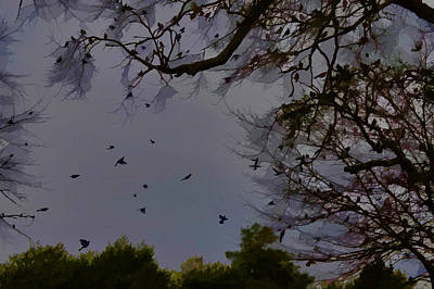 Photograph - Blackbirds Evening Gathering by Lesa Fine