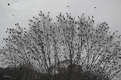 Photograph - Blackbirds Have Arrived by Ericamaxine Price