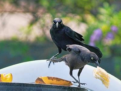 Photograph - Blackbirds by Nadia Sanowar