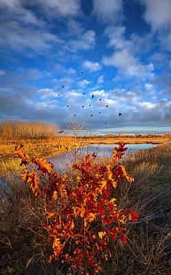 Photograph - Blackbirds Singing by Phil Koch