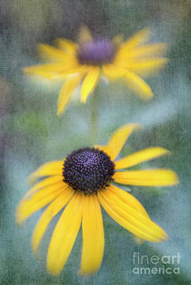 Photograph - Blackeyed Susan by Elena Nosyreva
