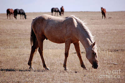 Photograph - Blackfeet Indian Reservation Horses by Rose De Dan