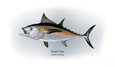 Blackfin Tuna Art Print by Ralph Martens