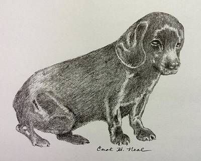Drawing - Blackie by Carol Neal