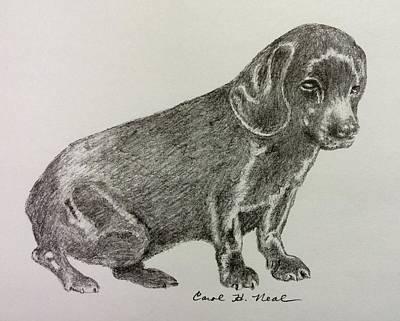 Drawing - Blackie by Carol Neal