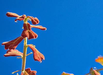 Photograph - Blackjack Oak Sprout by VB Medley