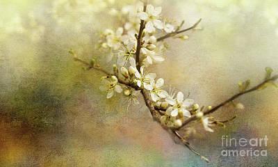 Digital Art - Blackthorn Flowers by Liz Alderdice
