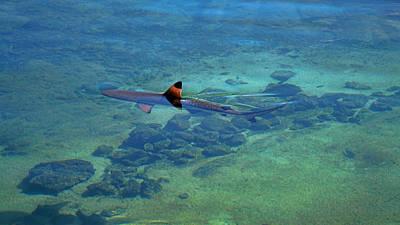 Photograph - Blacktip Reef Shark by Pamela Walton