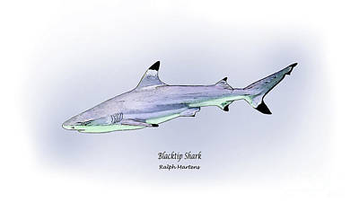 Reef Shark Drawing - Blacktip Shark by Ralph Martens