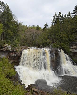 Moody Trees - Blackwater Falls - West Virginia by rd Erickson