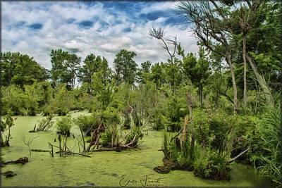 Photograph - Blackwater Swamp by Erika Fawcett