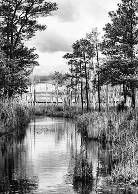 Photograph - Blackwater Wildlife Refuge by Richard Macquade