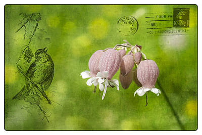 Wall Art - Photograph - Bladder Campion Postcard by Michel Emery