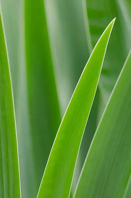 Photograph - Blades by Don Schwartz