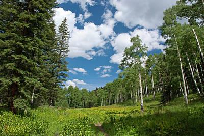 Photograph - Blaine Basin Trail Through An Aspen Grove by Cascade Colors
