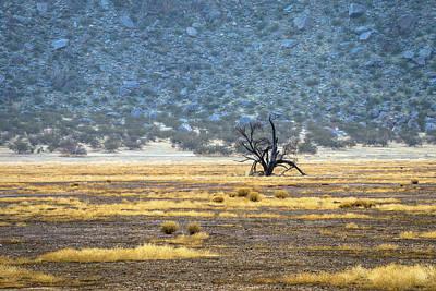 Photograph - Blair Valley Tree by Alexander Kunz
