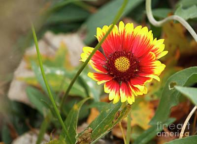 Claude Monet - Blanket Flower by Linda Joyce