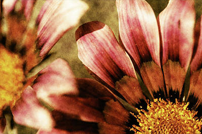 Pacific Mixed Media - Blanket Flowers by Bonnie Bruno
