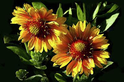 Digital Art - Blanket Flowers - Gaillardia by Jacqi Elmslie
