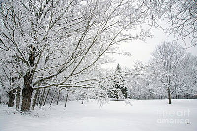 Photograph - Blanket Of Snow by Alana Ranney