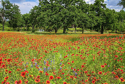 Photograph - Blanketed With Wildflowers by Lynn Bauer
