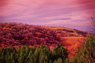 Photograph - Blazing Autumn by Goran Vucicevic