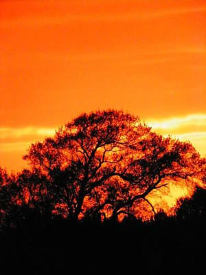 Irish Leprechauns - Blazing Oak Tree by Karen Wiles