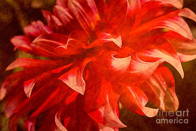 Mixed Media - Blazing Red Dahlia by Joy Watson