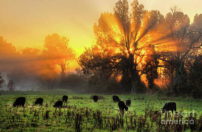 Photograph - Blazing Sunrise Over A Farm Pasture Horizontal by Dan Carmichael