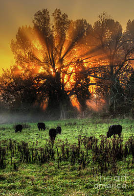 Photograph - Blazing Sunrise Over A Farm Pasture Vertical by Dan Carmichael