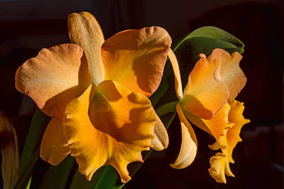 Photograph - Blc. Bouton II by Alana Thrower
