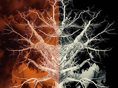 Photograph - Bleached Bones Of The Symmetrical Tree by John Williams